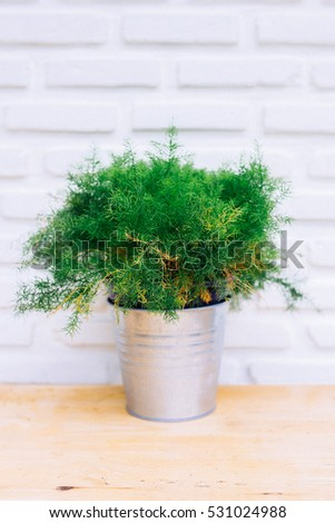 Trees in pots on a white background.