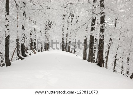 Trees in show in the forest - stock photo