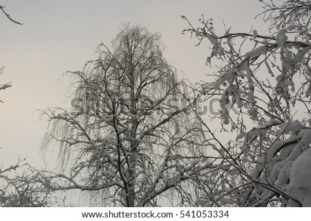 trees in snow against the sky