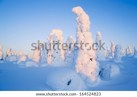 Trees in snow. Cold snow winter.