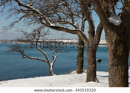 Trees in snow on the beach
