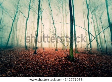 trees in the autumn mist - stock photo
