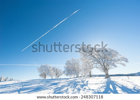 Trees in the Black Forest with contrail - stock photo