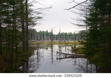 Trees in the brush and within the water - stock photo