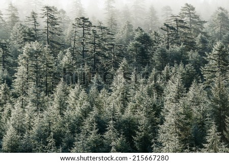 Trees in the dew, after a night of fog - stock photo