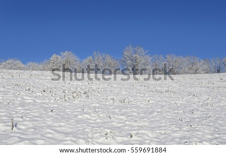 Trees in the distance on top of a mountain in the winter snow.