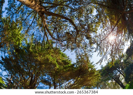 Trees in the Forest background - stock photo