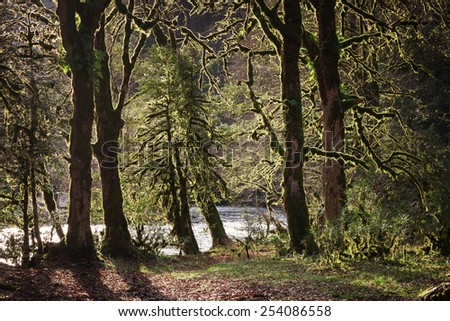 Trees in the forest overgrown with moss - stock photo