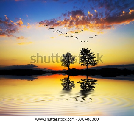 trees in the lake - stock photo