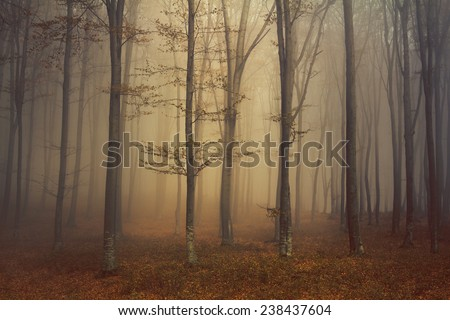 Trees in the mist during autumn - stock photo
