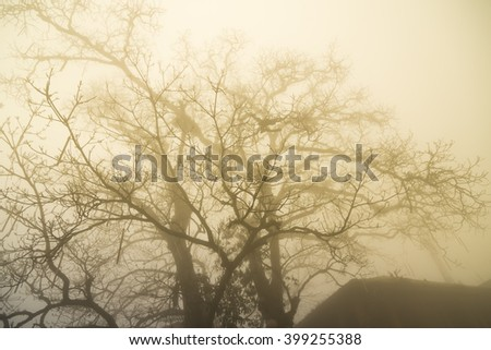 Trees in the mist with sunlight in one day morning of winter season.