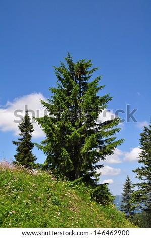 Trees in the Mountains of Austria - stock photo