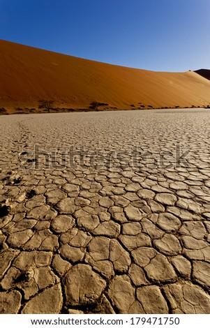 trees in the namib desert - stock photo