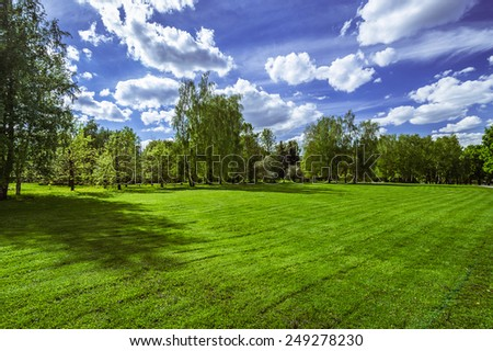 Trees in the park. Green - stock photo