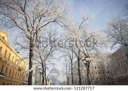 Trees in the park in winter with snow