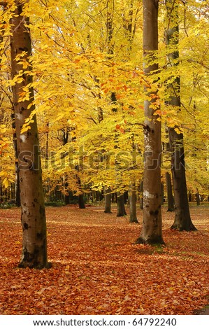 Trees in the park with leaves turning yellow, typical autumn scene