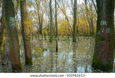 trees in the pond