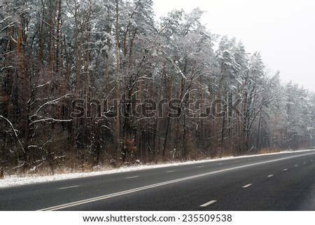 trees in the snow along the winter road