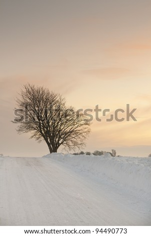 Trees in the snow at a small road at sunset