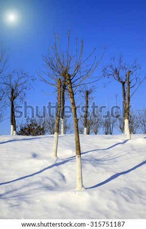 trees in the snow, closeup of photo