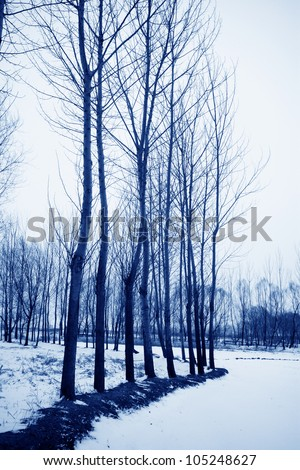 trees in the snow in winter in china