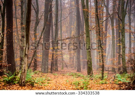 Trees in the wood in autumn season