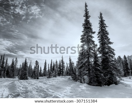Trees in winter landscape in black and white