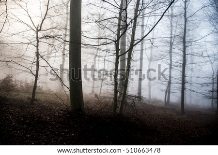 Trees in wood on a foggy day spooky nature atmosphere