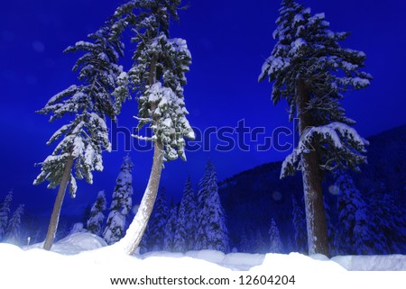 Trees lit by moonlight and blue sky at night. - stock photo