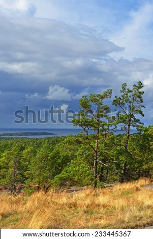 Trees lit with sun before a thunder-storm. Aland, Finland