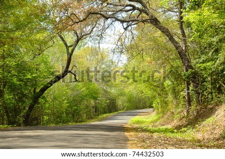 Trees making archway over country road in spring time