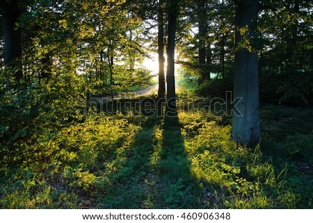 Trees making shadows in the forest at sunset
