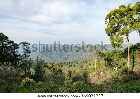 Trees mountains sky background
