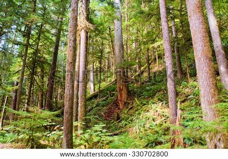 Trees near Lake Crescent in the Olympic Peninsula, WA state - stock photo