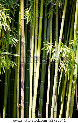 Trees of a bamboo with leaf - stock photo