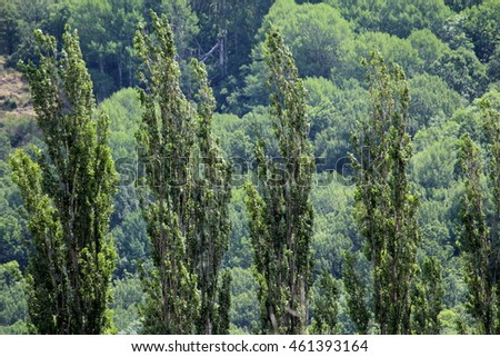 Trees of Barruera, Pyrenees