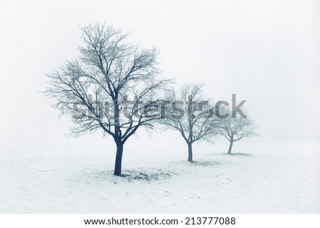 Trees on a cold winter day - stock photo