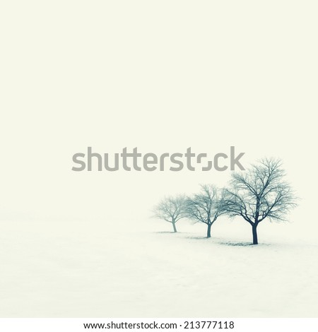 Trees on a foggy winter day - stock photo