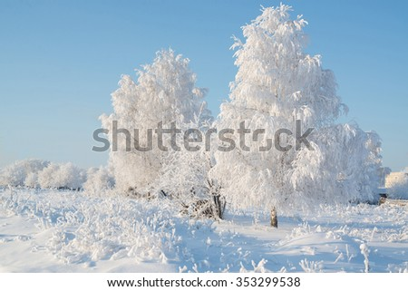 Trees on a frosty day