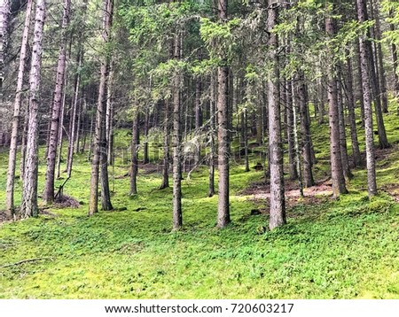 Trees on a hill with green moss