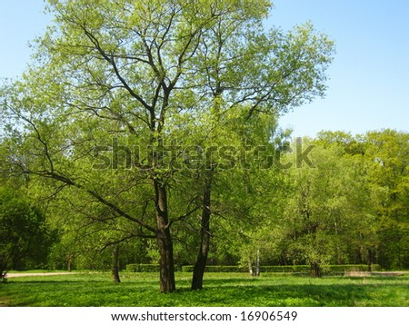 Trees on a meadow.