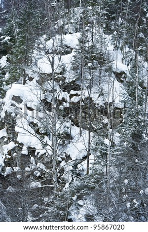 trees on a mountain covered with snow - stock photo