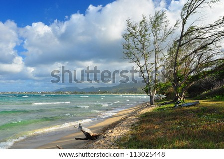 Trees on a windy tropical coast