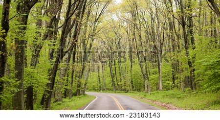 Trees on both sides of the road running through the forest in the spring in the Shenandoah National Park, Virginia, USA, Skyline Drive. - stock photo