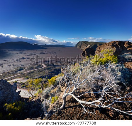Trees on edge of volcanic landscape, Plaine des Sables, Reunion island.
