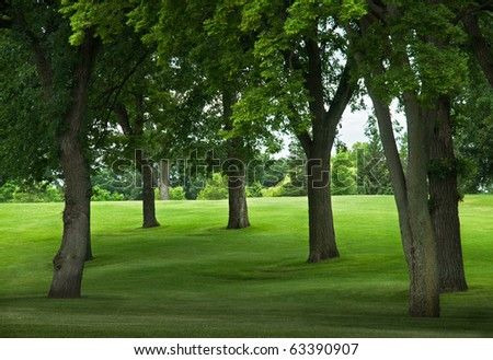 Trees on Grassy Incline  - edge of park or golf course - stock photo