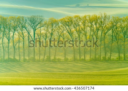 Trees on green wavy hills in South Moravia, Csezh Republic - stock photo