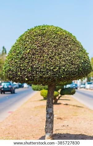 Trees on Road - stock photo