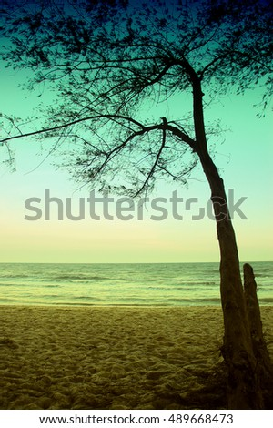 trees on the background of a beautiful beach, sweet dreammy, retro color