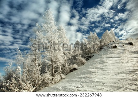 trees on the mountains in winter - stock photo